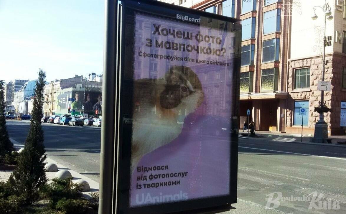 Фото з мавпочкою: у столиці запустили флешмоб, фото-4